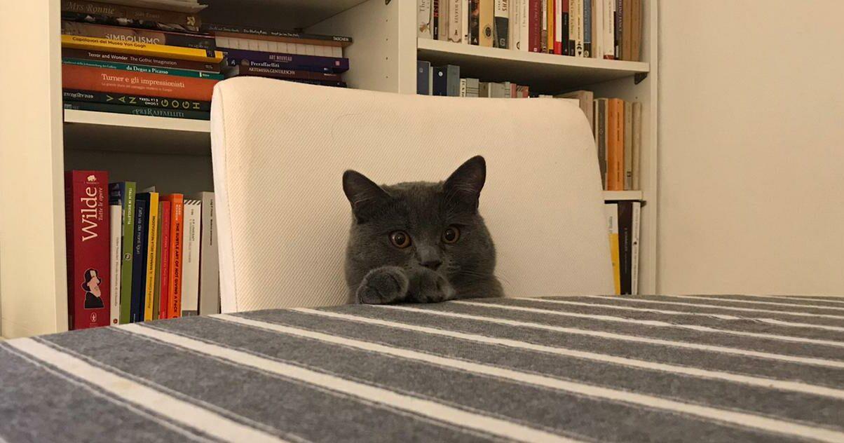 Test sui gatti