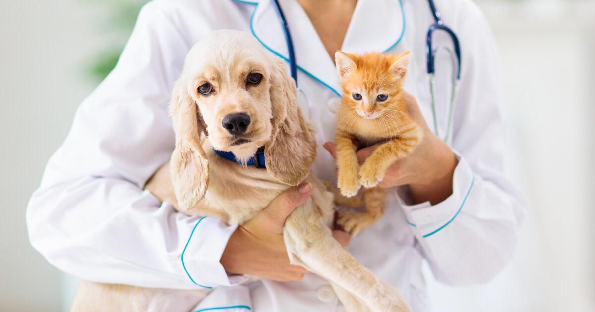 Linee guida per la gestione di animali domestici