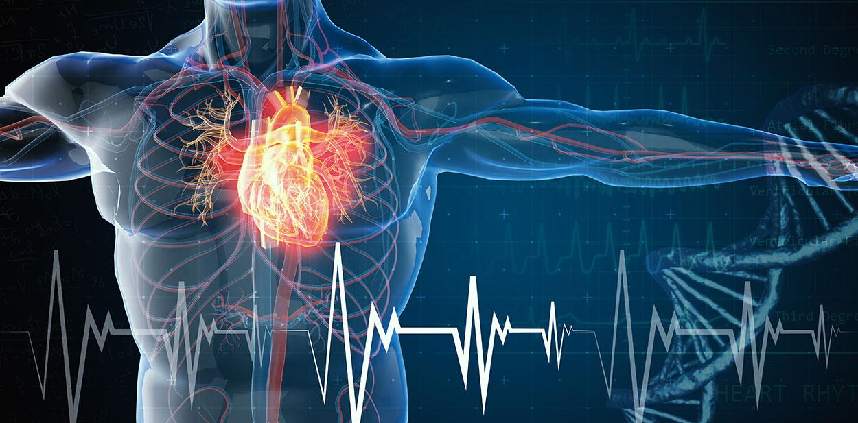 La troponina per prevenire le malattie cardiovascolari nelle persone sane